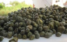 linosa-capperi-frutti